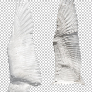 翼の表裏(印刷用)