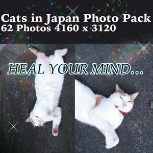 猫画像素材【癒やし用】