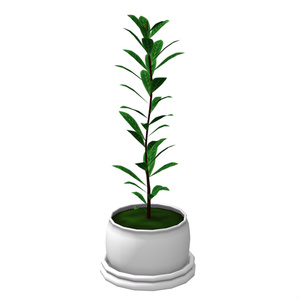 観葉植物&チェスト