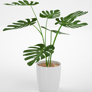 3D モデルデータ planter_monstera01