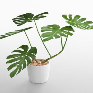 3D モデルデータ planter_monstera02