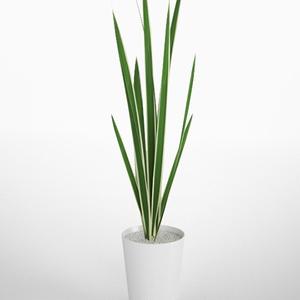 3D モデルデータ planter_variegata01