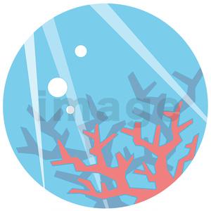 サンゴ礁シャツ