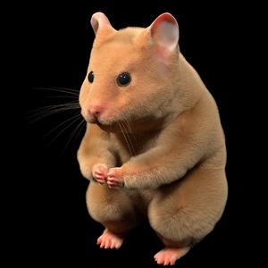 Animal3DCG:雑種のハムスター(Hamster)