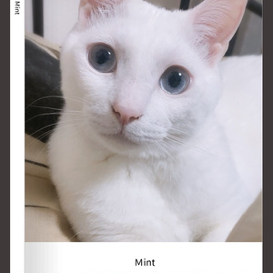 ミント写真集⑥ 可愛いお顔ver