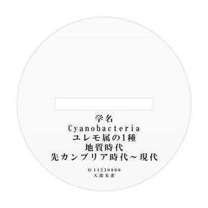 シアノ36バクテリア
