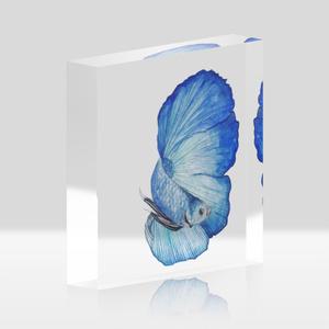 ベタ青色フルムーン*アクリルアクアリウム