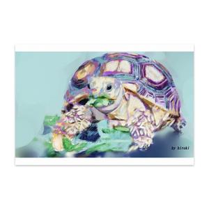 リクガメのポストカード