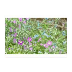 ワスレナグサのポストカード