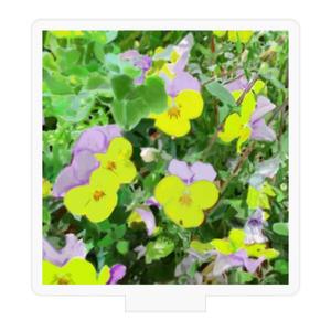 パンジー(紫と黄色)のアクリルフィギュア