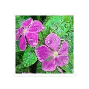 雨に濡れるニチニチソウのアクリルバッチ
