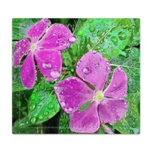 雨に濡れるニチニチソウの捺印マット