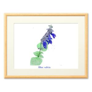 青いサルビアの複製画(プリモアート) - A4
