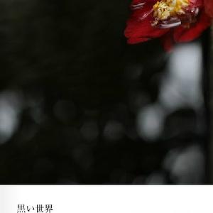 【通常版】黒い世界(写真集)