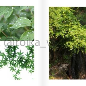【通常版】緑の世界(写真集)