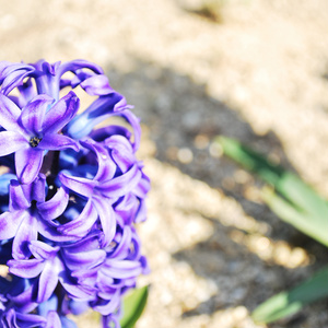 花を咲かせて。