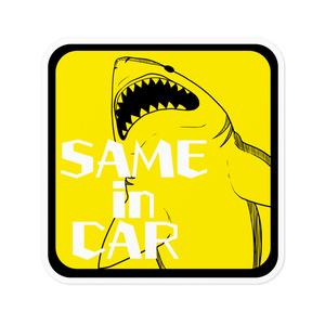 鮫が車に乗っています