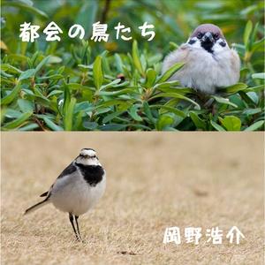 写真集「都会の鳥たち」