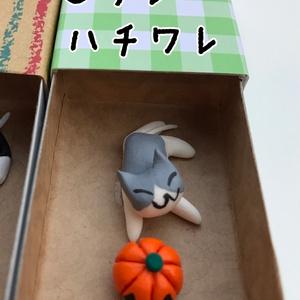 ネコさん ハロウィンBOX