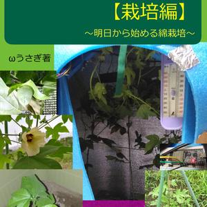 綿を育てて布を作る【栽培編】~明日から始める綿栽培~