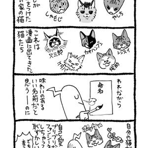 苦悩の猫遊び