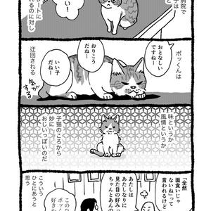 星降る猫遊び