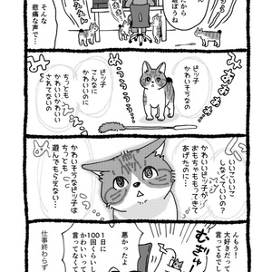 風薫る猫遊び