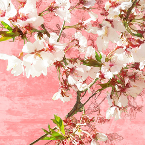 画像素材集14 桜