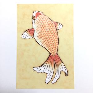 ポストカード「金魚」