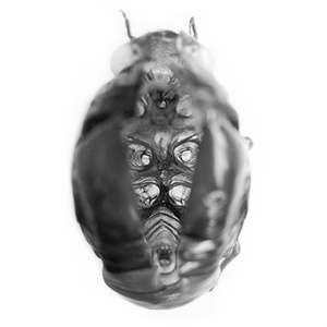 【DL版】 砂粒 1st album 『モラトリアム・エモイスト・シンドローム』