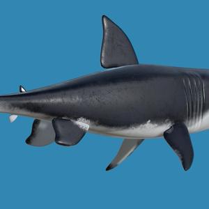 3Dモデル 鮫 [Shark]