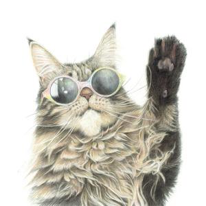 猫の絵はがきセット 色々ねこ