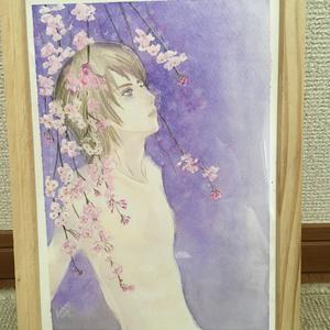 桜流し/水彩画 原画