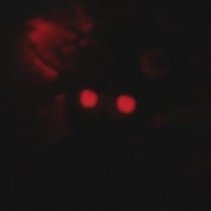【予約受付】赤き海の魔女💖蓄光アクキー