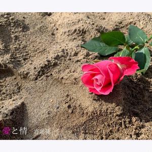 ミニアルバム「愛と情」