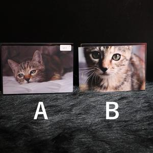保護猫ちぇきらブロマイド
