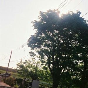 フィルムカメラ <matsudo>