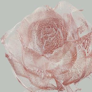ROSE ONE - wir