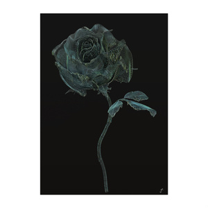 BLACK ROSE ONE - wir