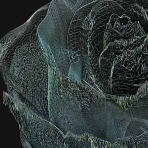 BLACK ROSE ONE - wir
