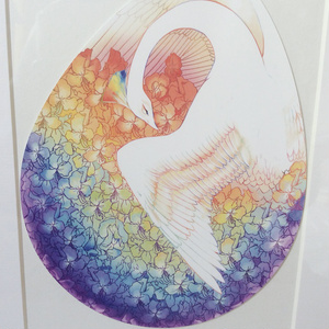 虹卵のポストカード