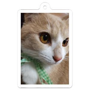 アクキー 猫