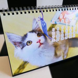 【卓上タイプ】はがね先生カレンダー2018年用:卓上型