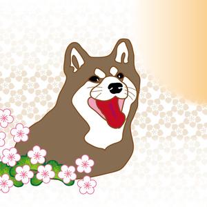 柴犬と梅の花のグリーティングカード