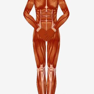 人体模型3d vrm