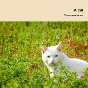 猫写真集 【A cat / Photography by mnt】 ねこぼん 1巻