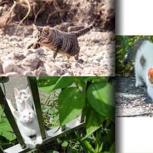 猫写真集 【B cat / Photography by mnt】 ねこぼん 2巻