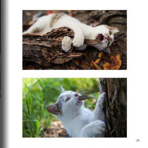 猫写真集 【Cat / Photography by mnt】 ねこぼん 3巻