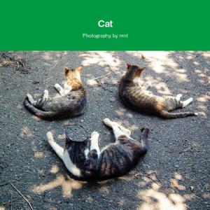 猫写真集セット 【A cat & B cat & Cat / Photography by mnt】 ねこぼん 3冊セット