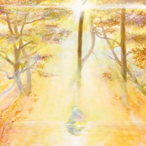 PC-17 ポストカード「光の森Ⅰ」